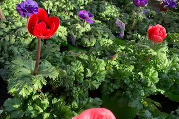 Les Jardins de Berloz -  Fleurs
